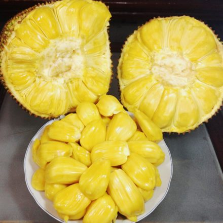 Fruit Jackfruit
